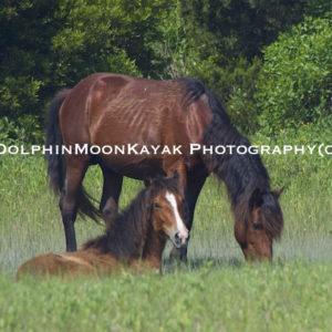 2015 Colt with Mom
