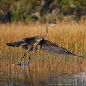 Air Heron