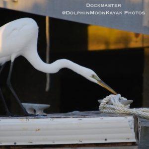 Dockmaster