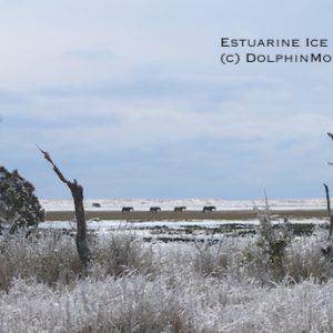 Estuarine Ice Storm