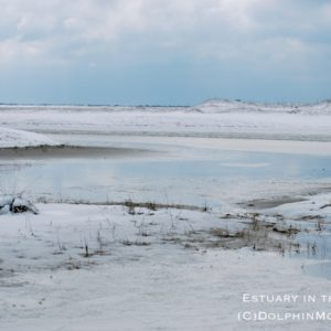 Estuary in the Snow