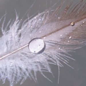 Feather water drop