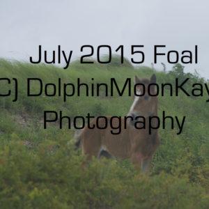 2015 Foal2