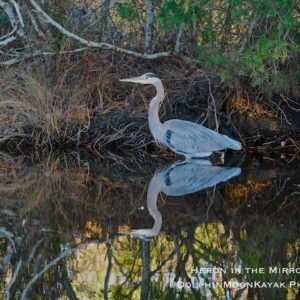 Heron in the Mirror
