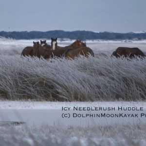 Icy Needlerush Huddle