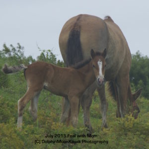July Foal with Mom