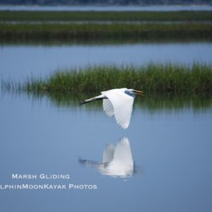 Marsh Gliding