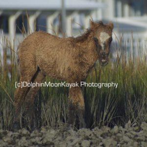 Marsh Mucking Foal