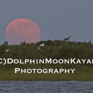 Moonrise over Middle Marsh Rookery