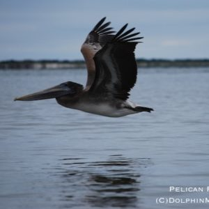 Pelican Reconn