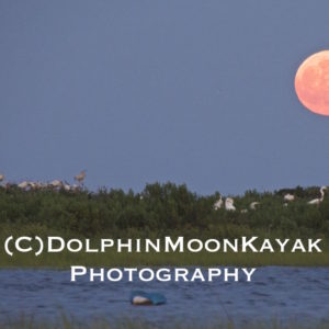 Rookery Moonrise