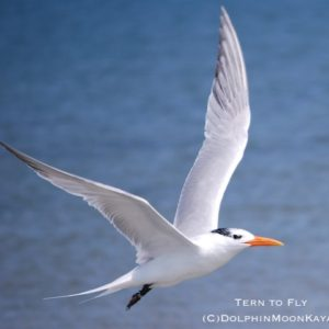 Tern to Fly