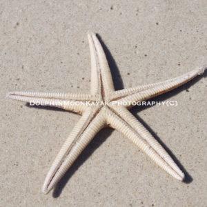 Under seastar