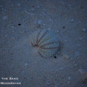 Urchin in the Sand