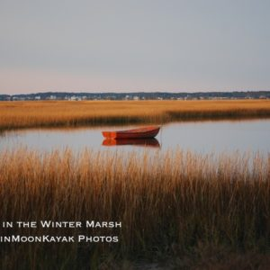 Waiting in the Winter Marsh