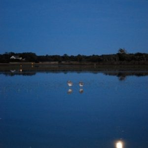WIllet Moonrise