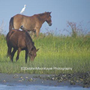 Egret on Horse