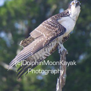 Osprey Pose